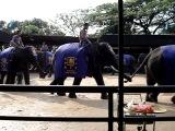 Шоу слонов.Тай.Тропический сад мадам Нонг Нуч
